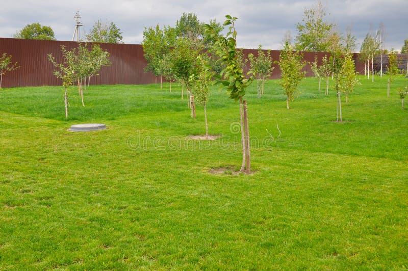 Plantação de árvores do fruto foto de stock