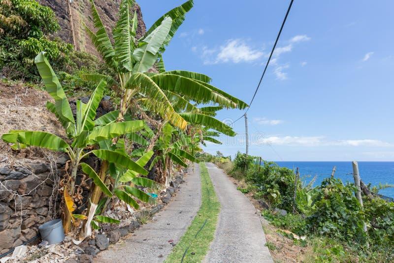 Plantação de banana ao longo da costa da ilha de Madeira, Portugal fotos de stock