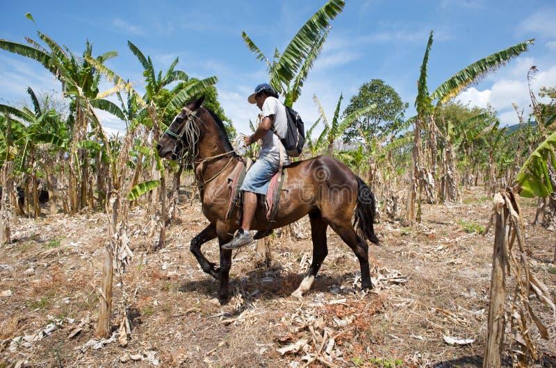 Plantação de banana em Nicarágua foto de stock royalty free