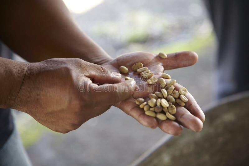 Plantação de café, Boquete, Panama16 imagens de stock royalty free