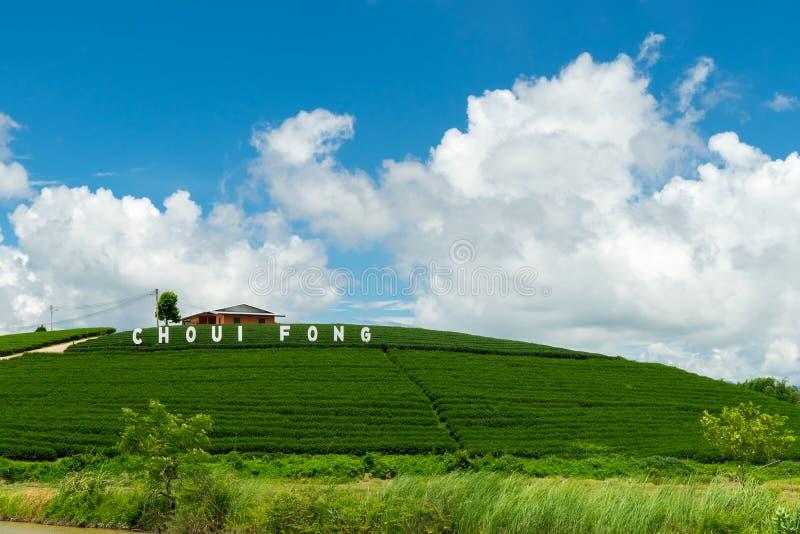 Plantação de chá imagem de stock royalty free