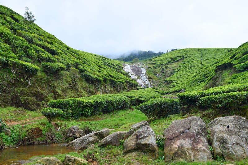 A plantação de chá com rochas e uma água pequena fluem em Munnar, Kerala, Índia imagens de stock
