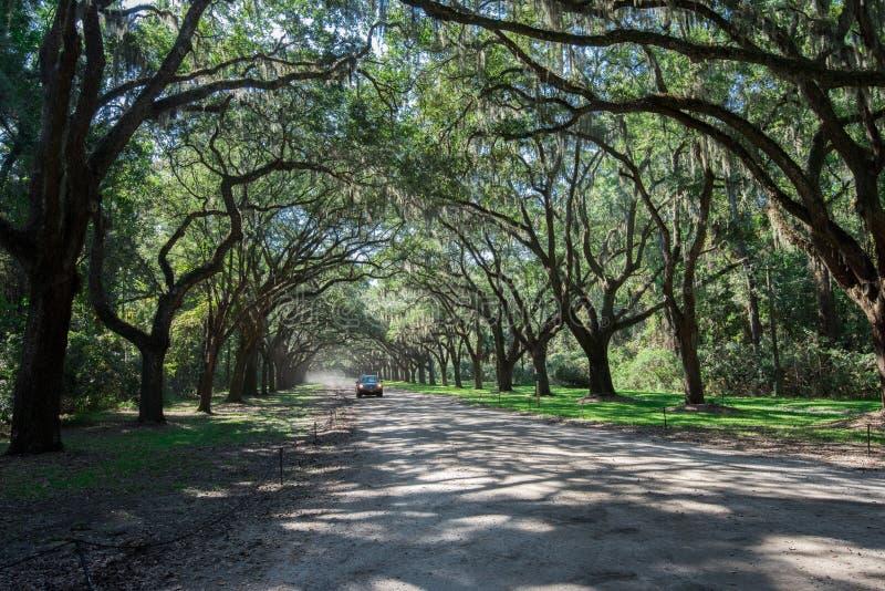 Plantação de Wormsloe, savana, GA fotos de stock royalty free