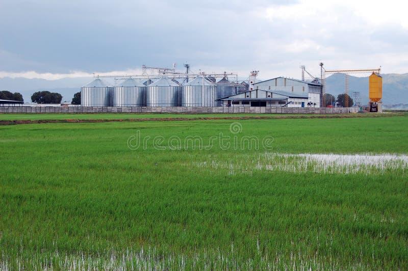 Plantação do arroz e do armazenamento fotografia de stock royalty free