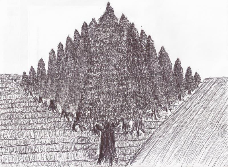 Plantação do pinho vista de um canto ilustração royalty free