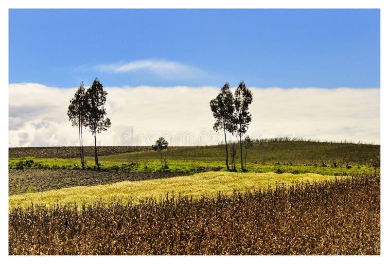 plantação no otavalo fotos de stock royalty free