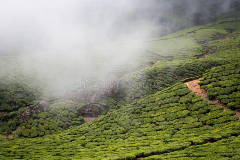 Plantações de chá imagens de stock royalty free