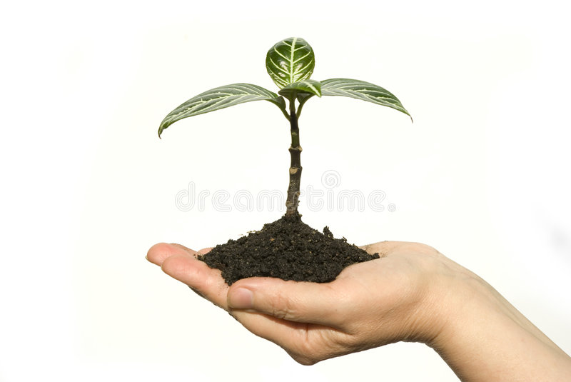 Planta à disposicão foto de stock