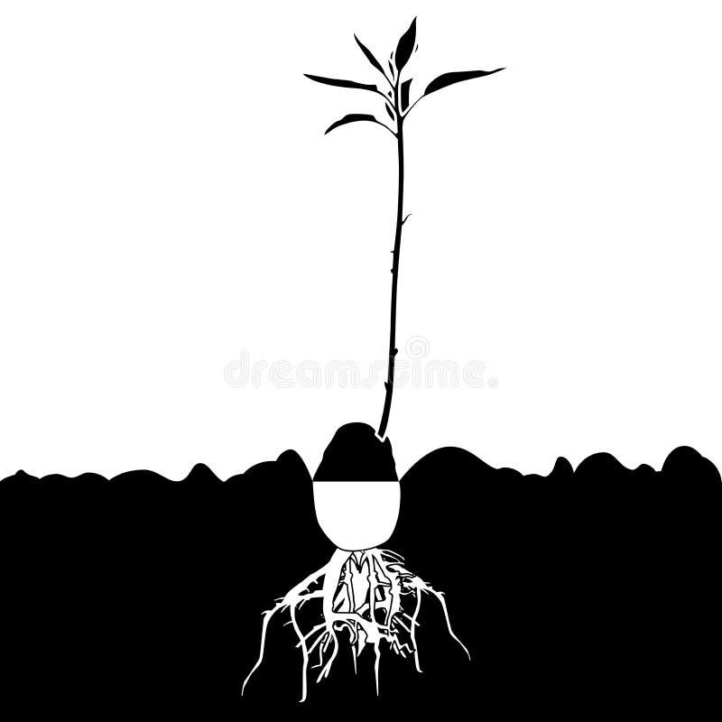 Planta-árbol del aguacate ilustración del vector