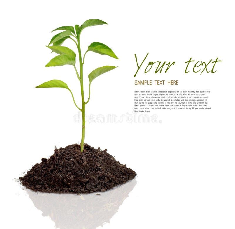 Planta ilustración del vector