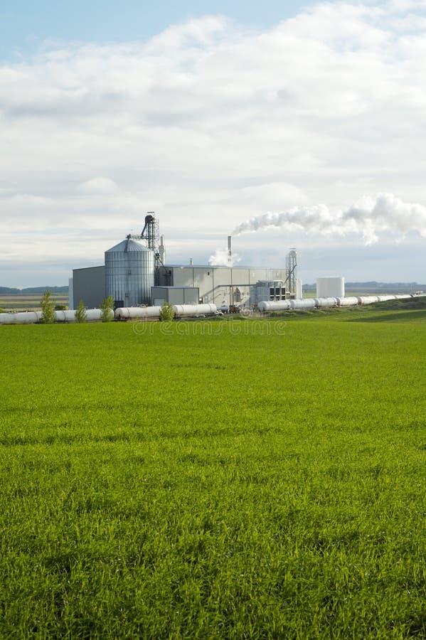 Planta 3 del etanol fotos de archivo