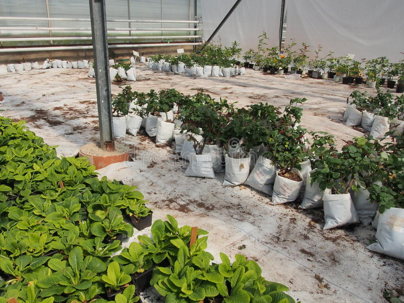 planta royaltyfria foton