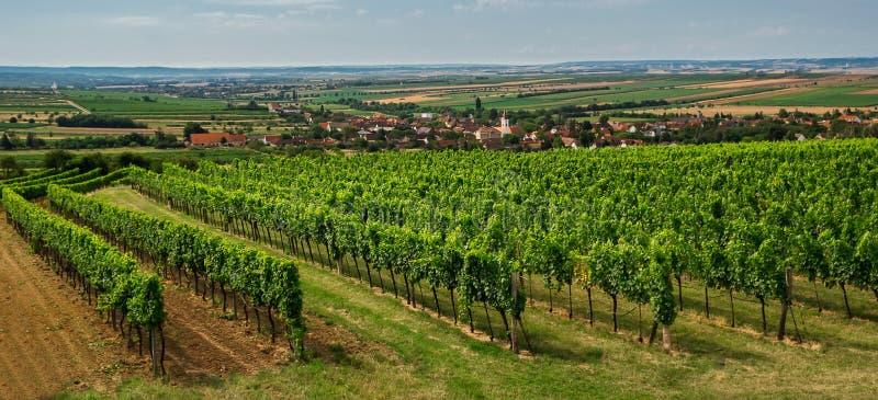 Planta agradable del viñedo con el pequeño pueblo, agricultura, sur Moravia, República Checa imágenes de archivo libres de regalías