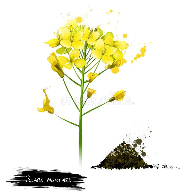 Planta amarela da mostarda preta Negro do Brassica ilustração stock