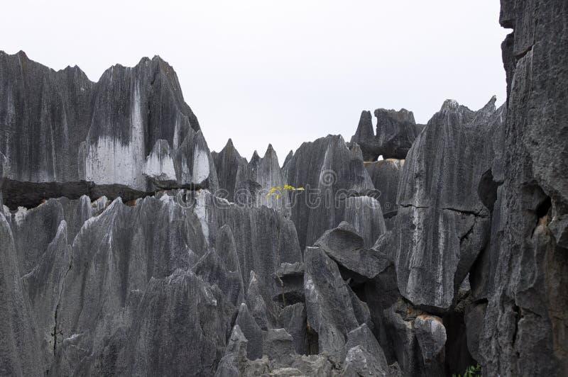 Planta amarilla aislada crecida en la roca fotografía de archivo libre de regalías