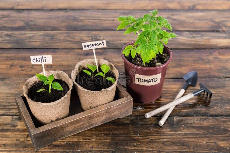 Planta av grönsaker och trädgårds- hjälpmedel på den trälantliga tabellen arkivbild