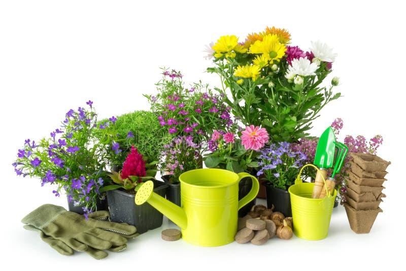 Planta av trädgårds- växter och blommor Trädgårds- utrustning på vit royaltyfri bild