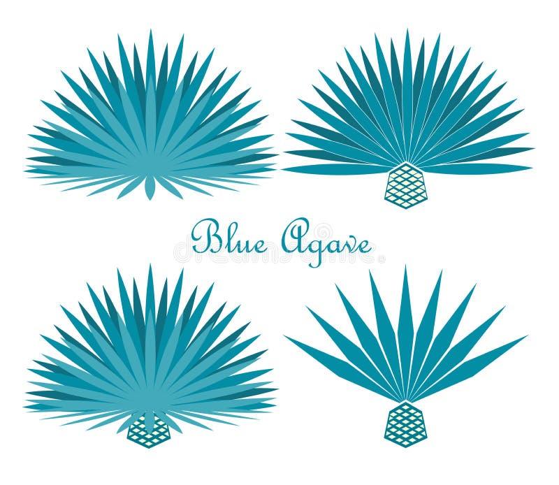 Planta azul da agave ou da agave do tequila Grupo do vetor ilustração do vetor