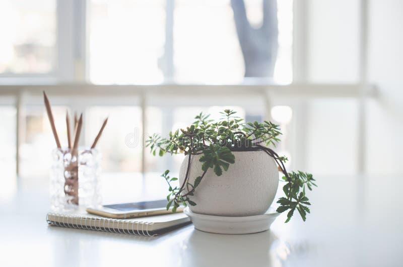 Planta, bloco de notas do negócio e smartphone home no luminoso foto de stock