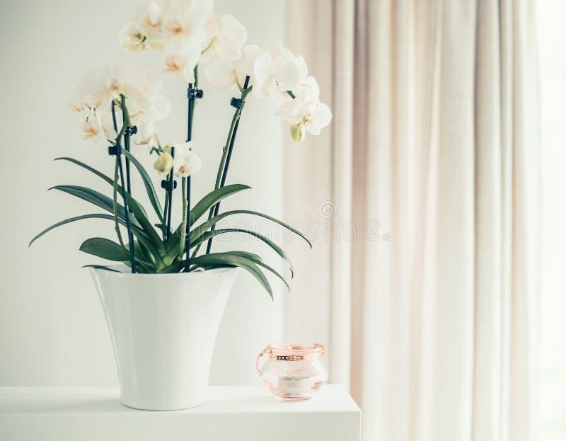 Planta branca da orquídea com as flores no potenciômetro na janela ainda, vista dianteira Decoração dos Houseplants fotografia de stock royalty free