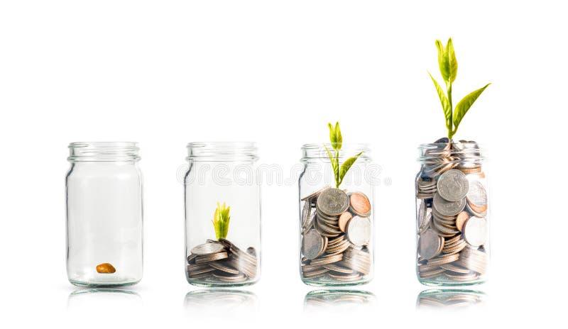 Planta brilhando em moedas empilhadas dentro de um pote com fundo branco Dividendos do conceito de depósito bancário e de investi fotografia de stock