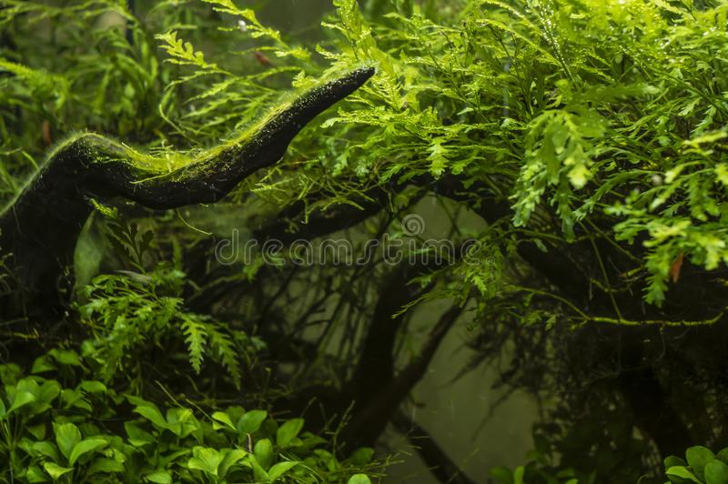 Planta brilhante no fundo de algas verdes fotografia de stock
