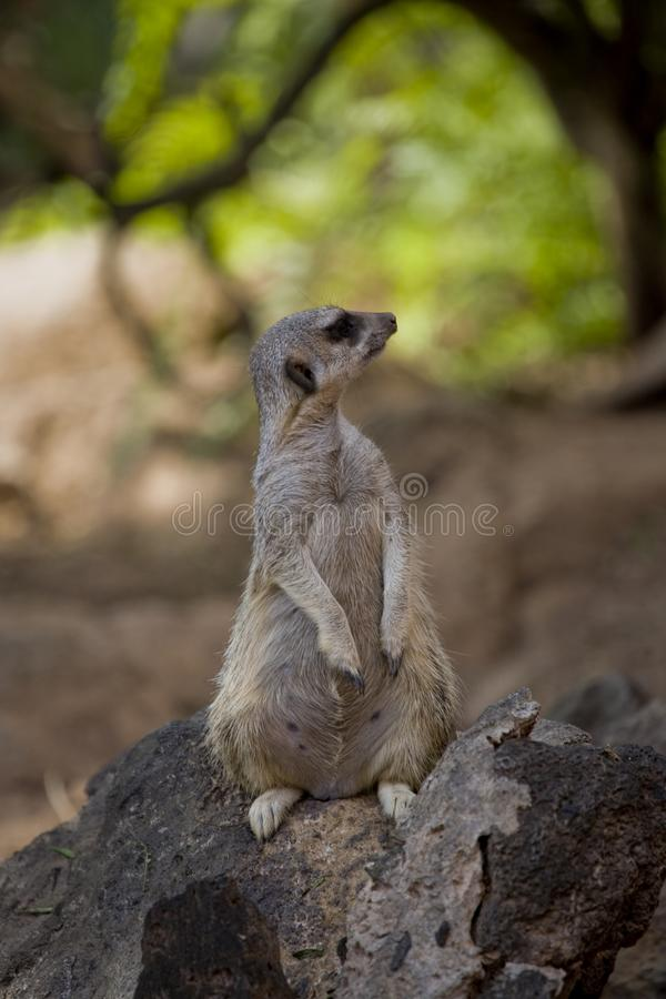 Planta carnuda animal mamífera em seu ambiente natural fora em um dia ensolarado morno fotos de stock