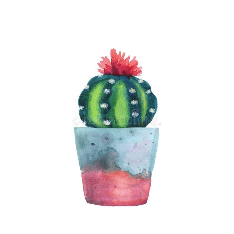 Planta carnuda da aquarela em um vaso de flores Isolado em um branco fotos de stock