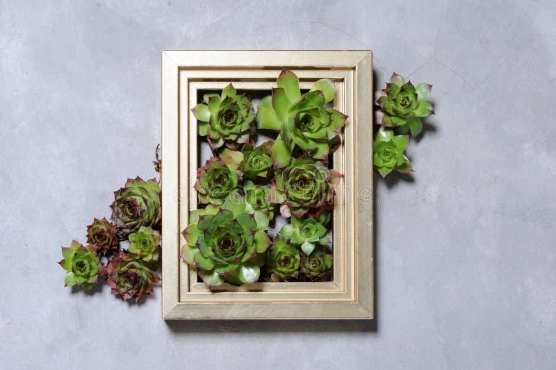 A planta carnuda planta a decoração foto de stock royalty free