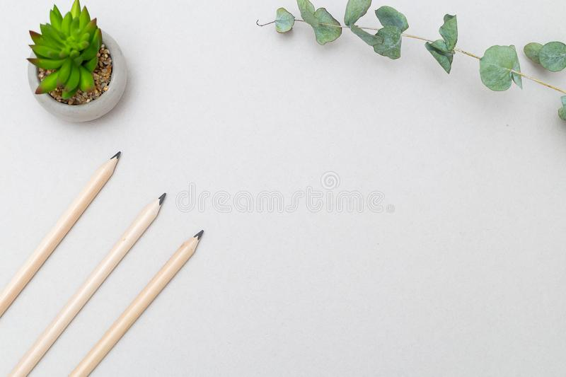 Planta carnuda e lápis em um fundo cinzento Projeto minimalista fotos de stock royalty free