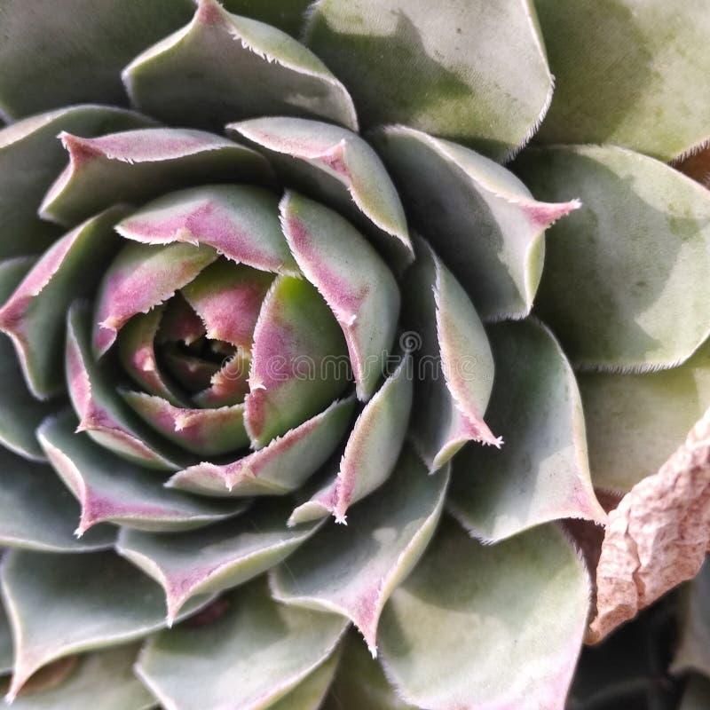 Planta carnuda verde, Denver, Colorado, outono fotografia de stock