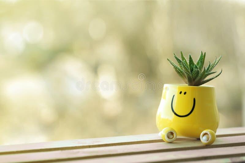 Planta carnuda verde diminuta no potenciômetro amarelo engraçado com sorriso da cara imagem de stock royalty free