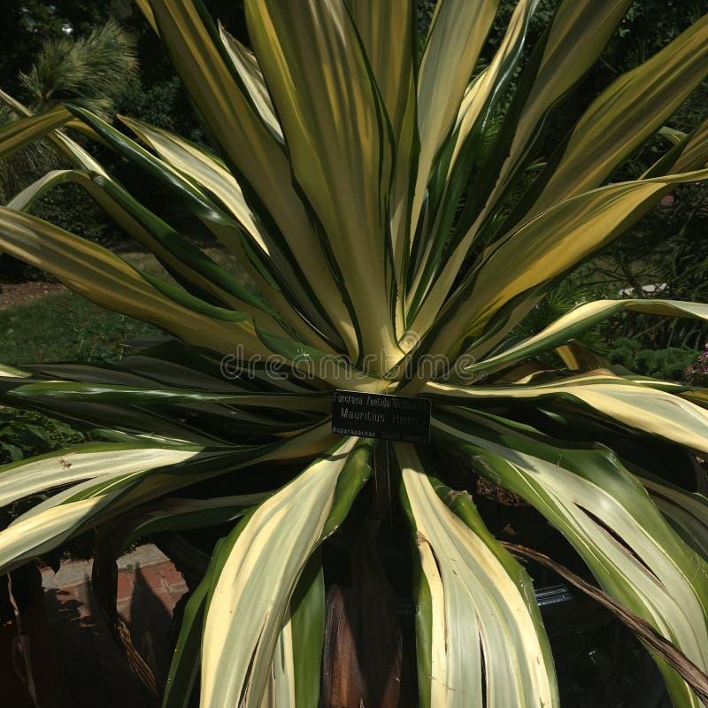 Planta cerca de Smithsonian fotografía de archivo