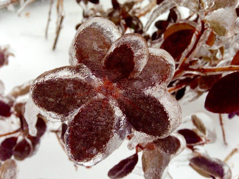 Planta coberta no gelo imagem de stock