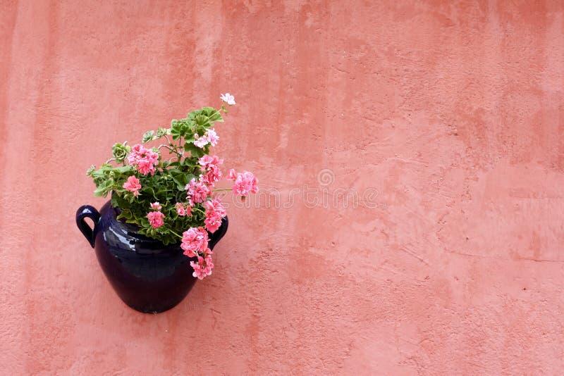 Planta colgante en la pared pintada terracota fotografía de archivo libre de regalías