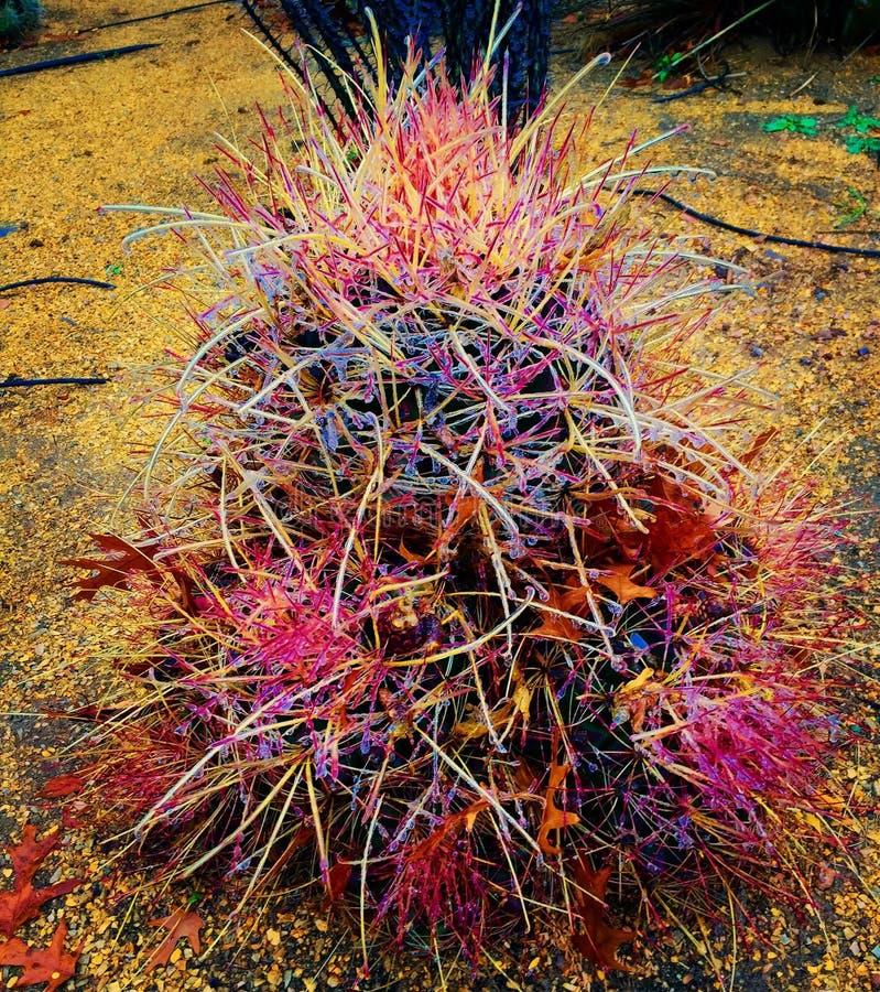Planta colorida fotos de archivo