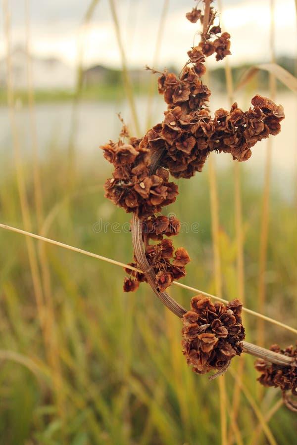Planta colorida del fishOutdoor de la charca del koi rodeada por la naturaleza de cercano oeste de la hierba fotos de archivo libres de regalías
