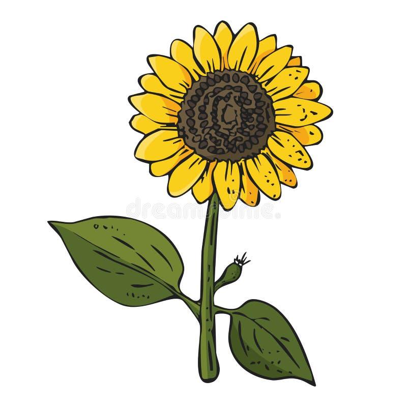 Planta colorida do girassol no fundo branco ilustração royalty free