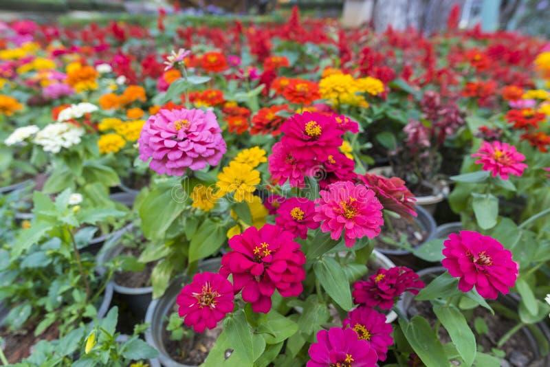 Planta colorida tropical da flor com cor branca fotografia de stock