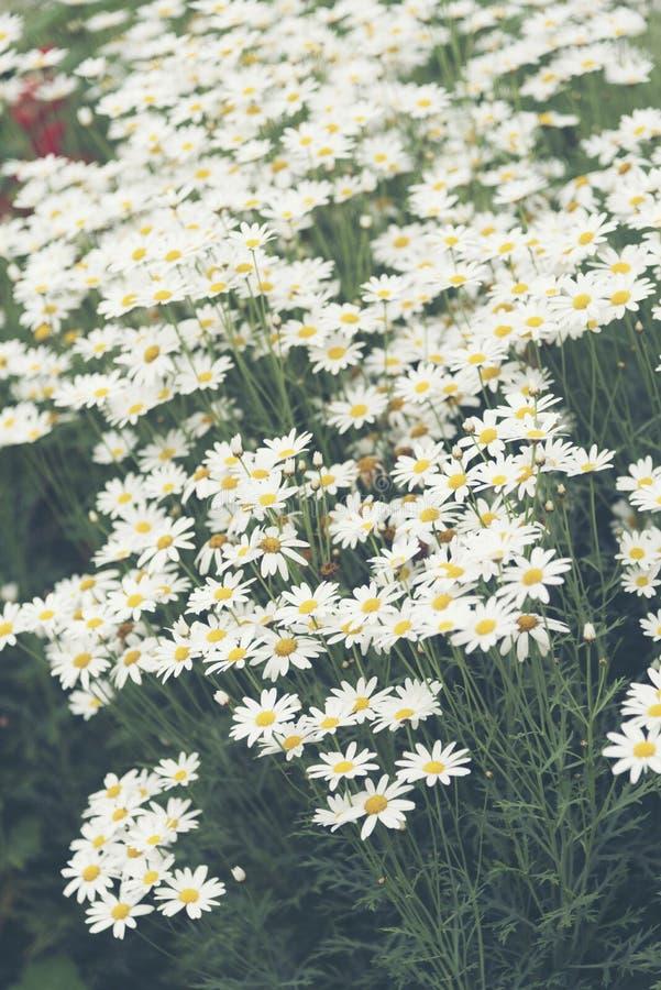 Planta colorida tropical da flor com cor branca foto de stock