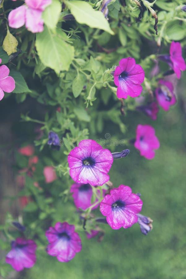 Planta colorida tropical da flor com cor branca fotos de stock royalty free