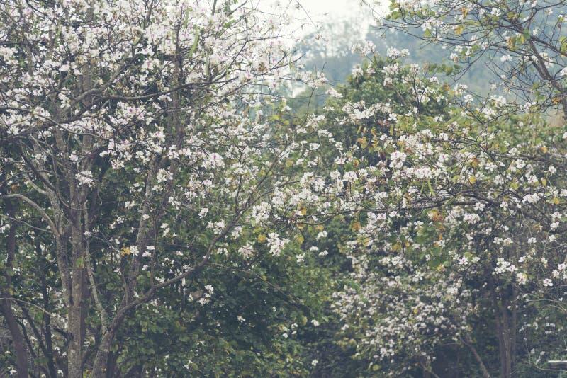 Planta colorida tropical da flor com cor branca imagens de stock
