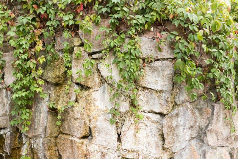 Planta com as folhas na parede foto de stock royalty free