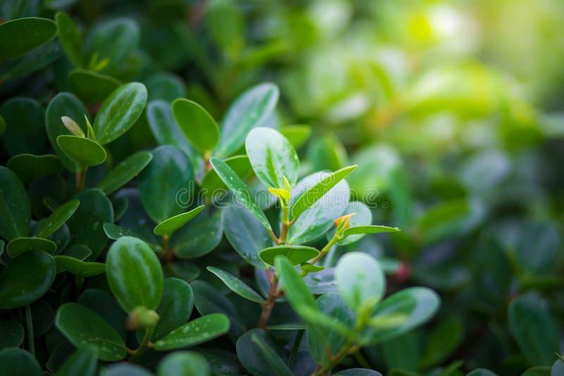 Planta com gota da água de chuva e rebentos da luz solar da planta sobre g imagens de stock royalty free