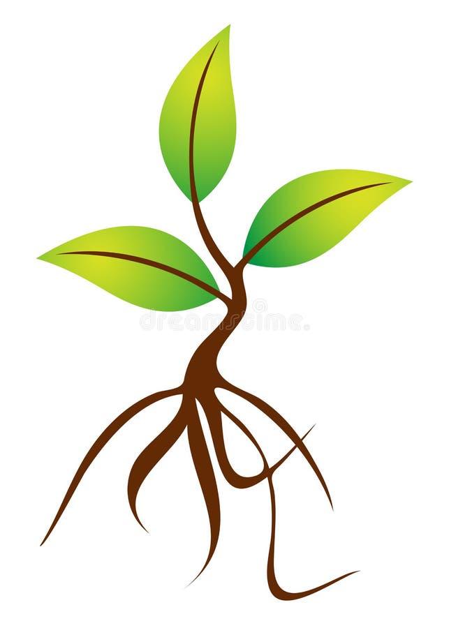 Planta com raizes ilustração royalty free
