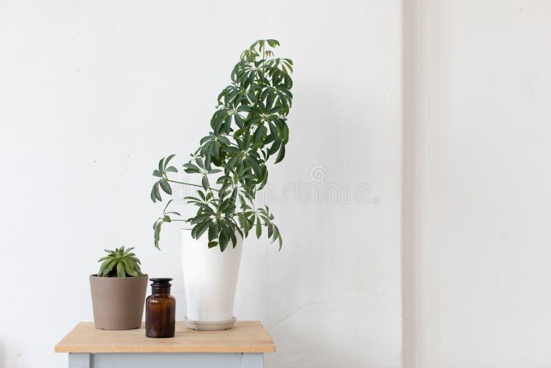 Planta compuesta de la casa de la maceta en las mesitas de noche foto de archivo imagen de - La casa de la maceta ...