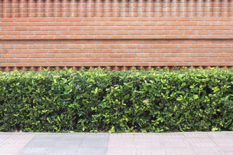 Planta con el fondo de la pared de ladrillo en fondo decorativo del jardín foto de archivo libre de regalías