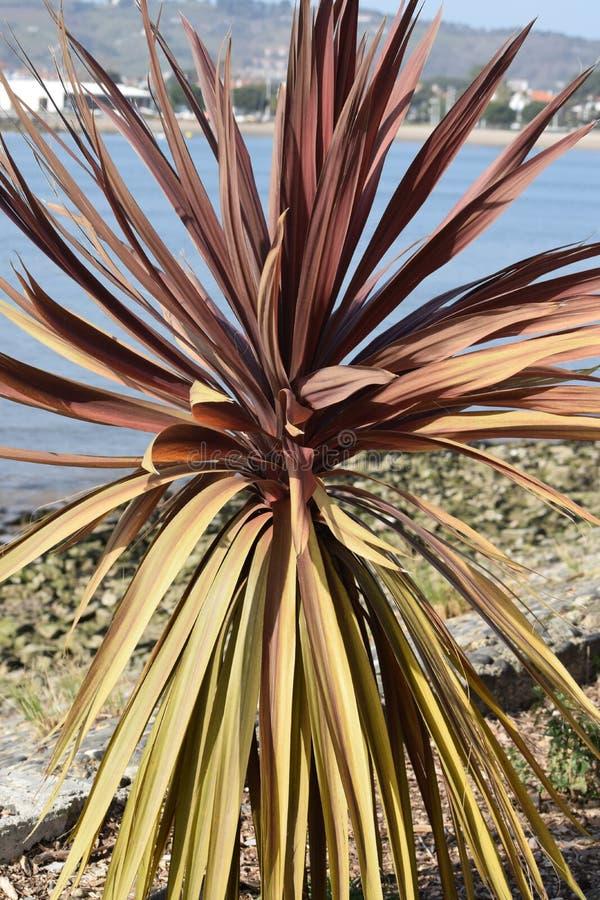 Planta con las hojas rojas y las hojas secas en la playa imagen de archivo libre de regalías