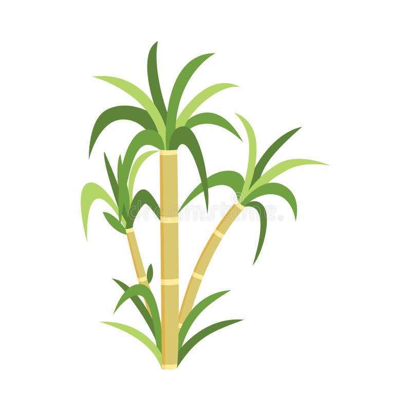 Planta con las hojas verdes - producción natural de la caña de azúcar de la plantación de la caña de azúcar ilustración del vector
