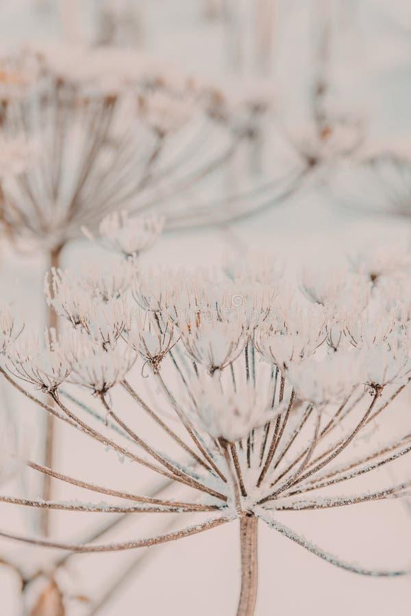 Planta congelada foto de stock royalty free